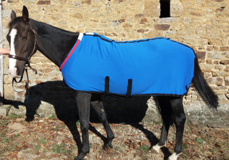 Herbb Elite Stable rug inc.belly band