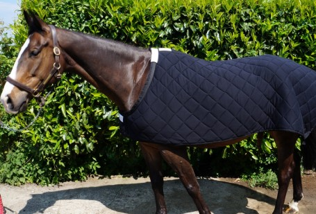 Herbb Diamond Quilted Stable Rug